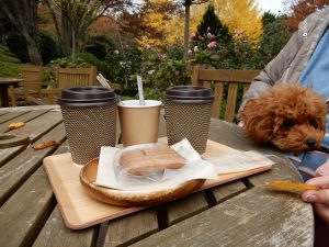 Treehouseではわんちゃんと一緒に外で食事を楽しめます