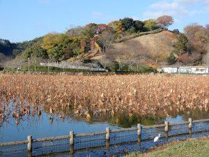 蓮華寺池公園は冬に向かっています