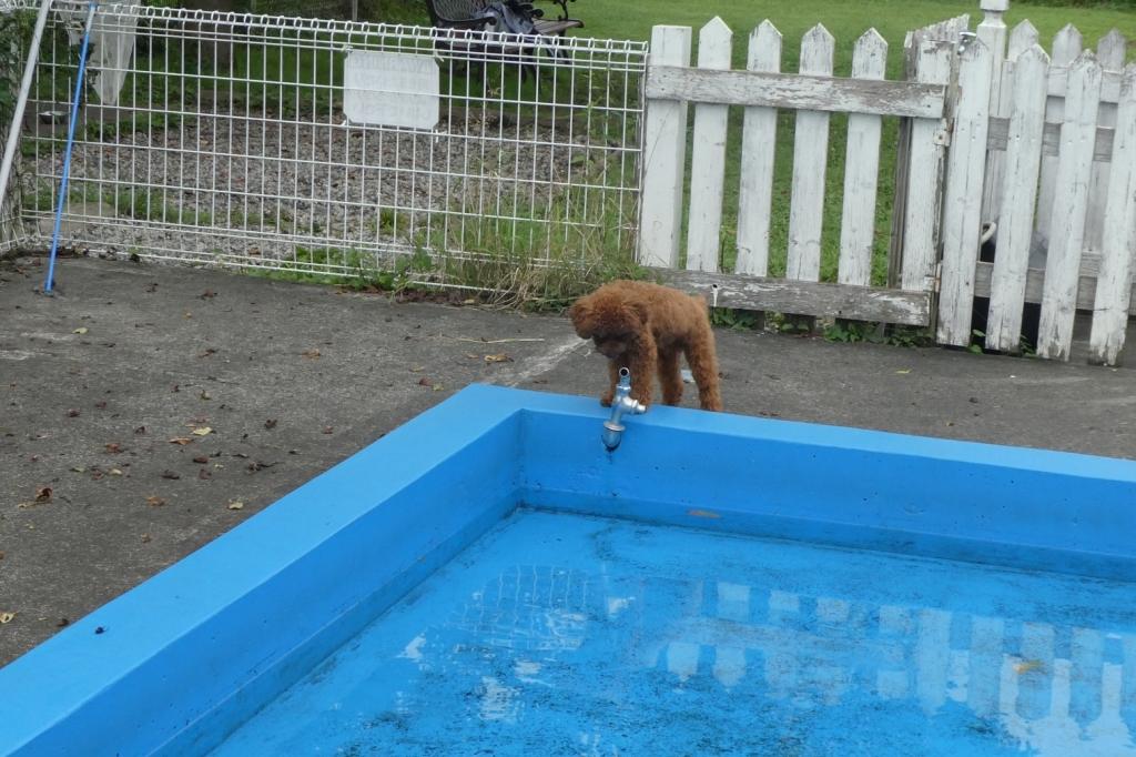 夏はプールもありました
