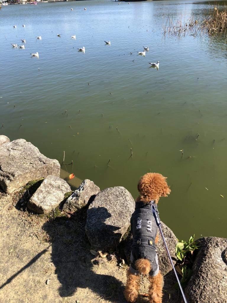 池の中をのぞきこむ