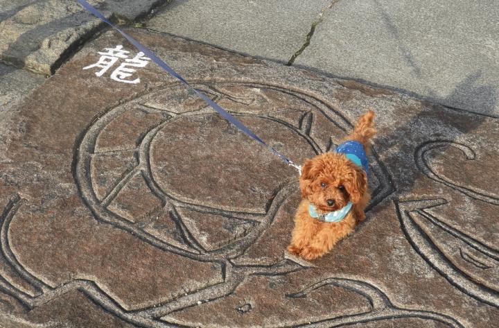 神祇大社(伊東市 伊豆高原)愛犬と行けるパワースポット神社