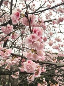 花がとてもきれい