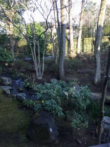 部屋から見たお庭。川が流れていて素敵