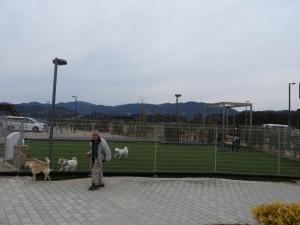 隣のエリアは大型犬