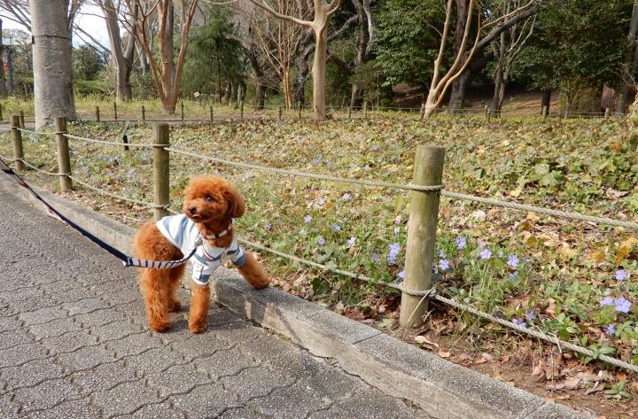 静岡県立美術館周りをお散歩(静岡市駿河区)
