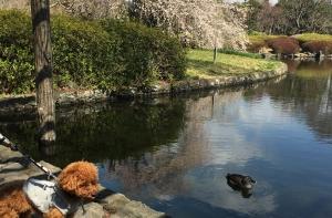 城北公園へお散歩、いつもの散歩コース(静岡市葵区)