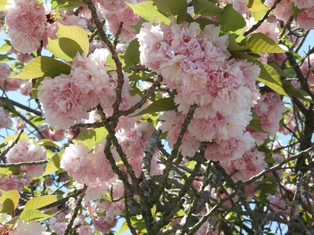 桜もまだ少し残っていました