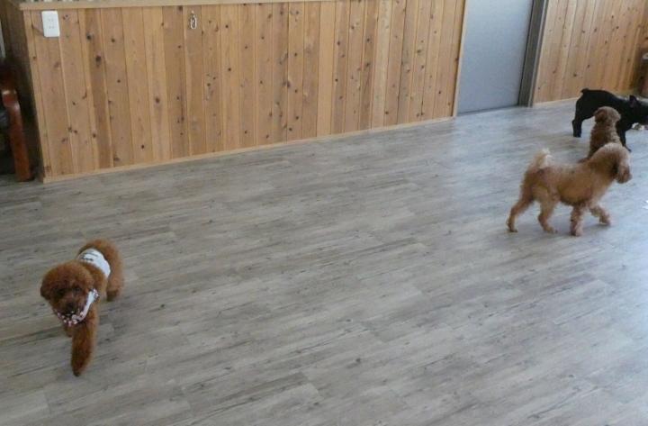 Dog Refre OGGi(ドッグリフレ オッジ)-室内ドッグラン(浜松市中区)
