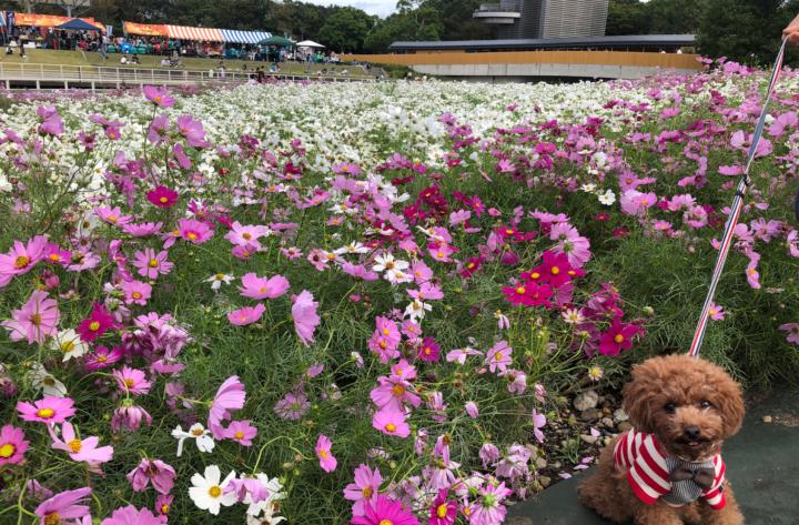 浜名湖ガーデンパークでお散歩(浜松市西区)