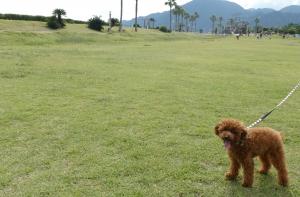 広野海岸公園でお散歩(静岡市駿河区)