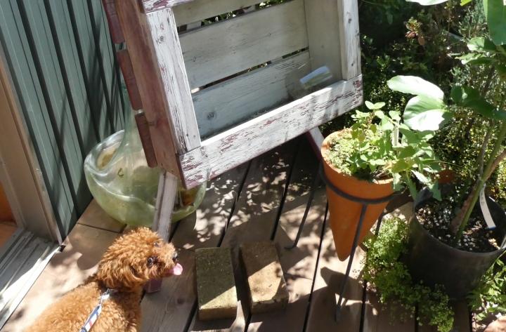 お花屋さんのドッグランgrigio (グリージョ)-静岡市駿河区