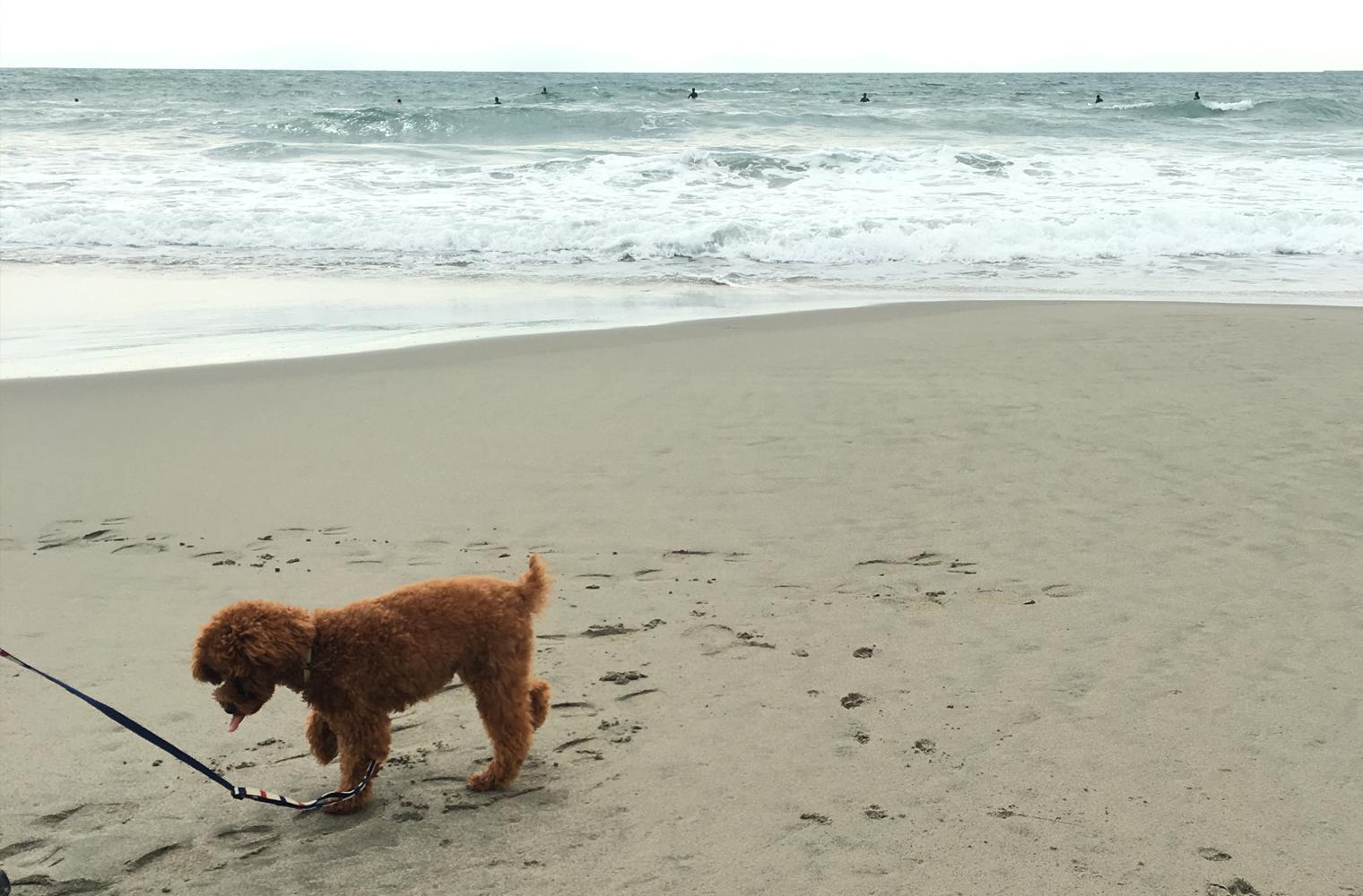 さがらシーサイドパーク・相良サンビーチ(相良海岸)でお散歩(牧之原市)