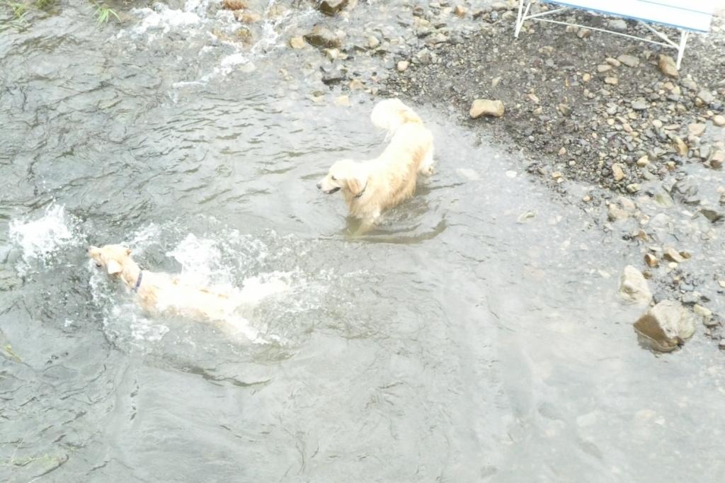 なんか下で泳いでいるわんこたちもいます