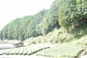 周りは茶畑のきれいな風景が見れます