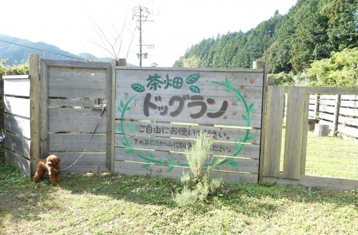 かつやま製茶 茶畑ドッグラン