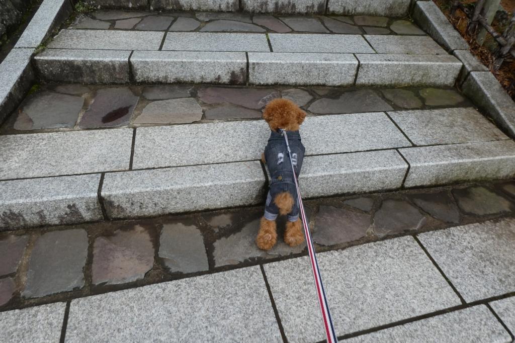 階段をうんしょうんしょ