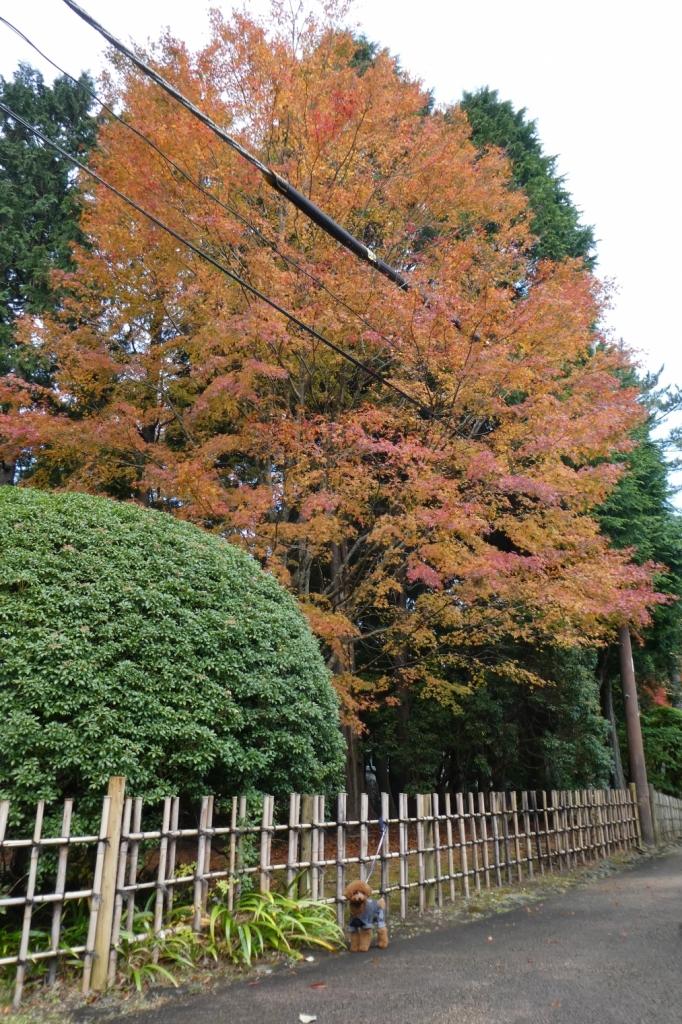 紅葉がとてもきれいでした