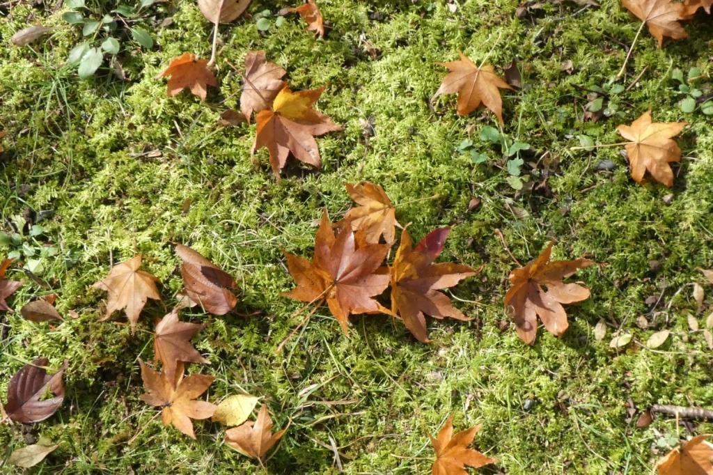 落ち葉好きです