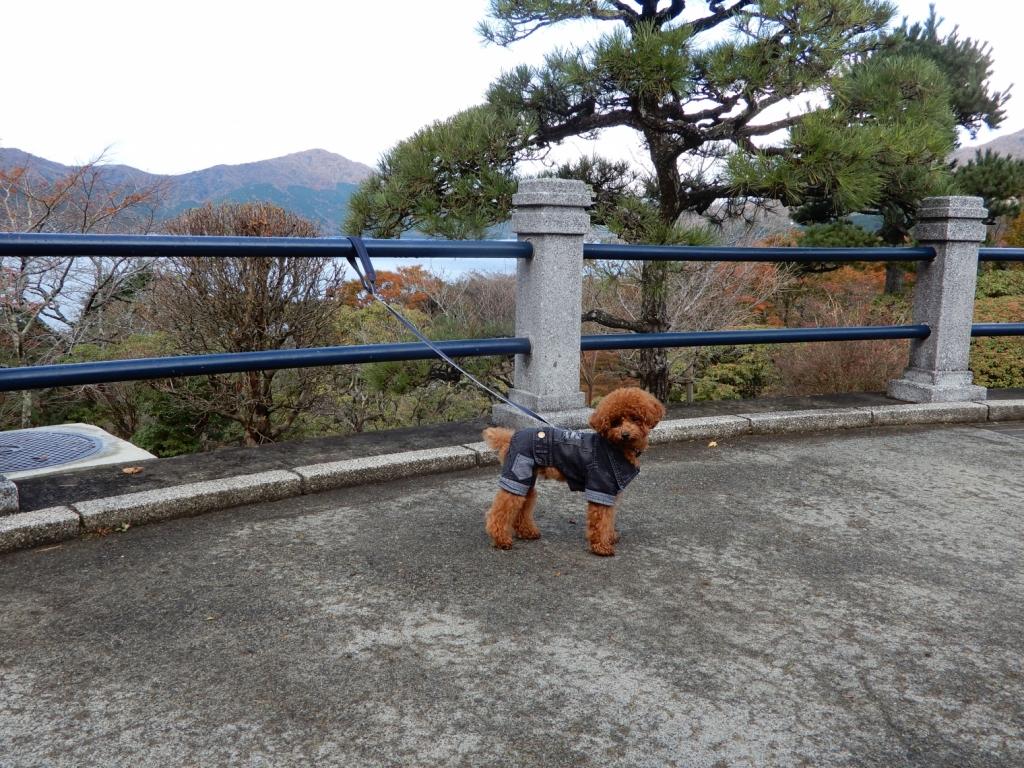 芦ノ湖も見えますよ