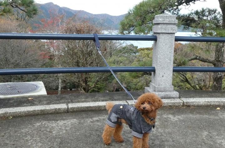 恩賜箱根公園でお散歩(箱根)