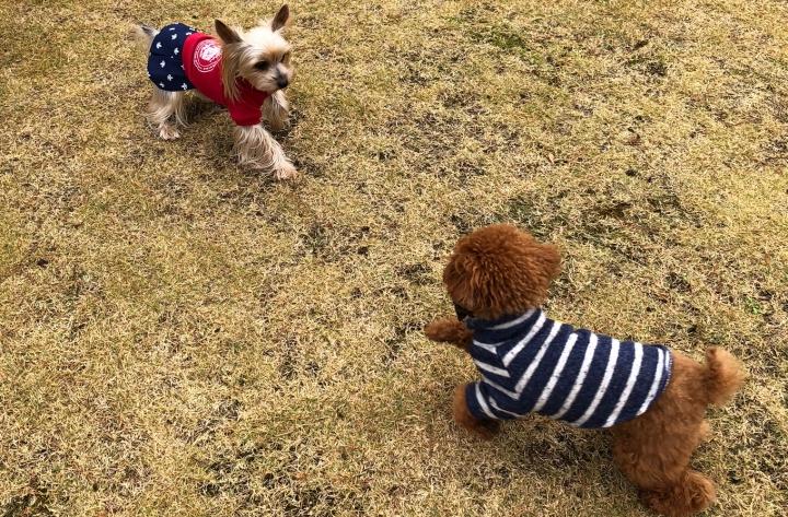 三島スカイウォーク ドッグランとお散歩(三島市)