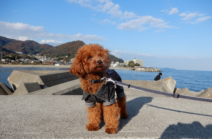 長浜海浜公園でお散歩(熱海市)
