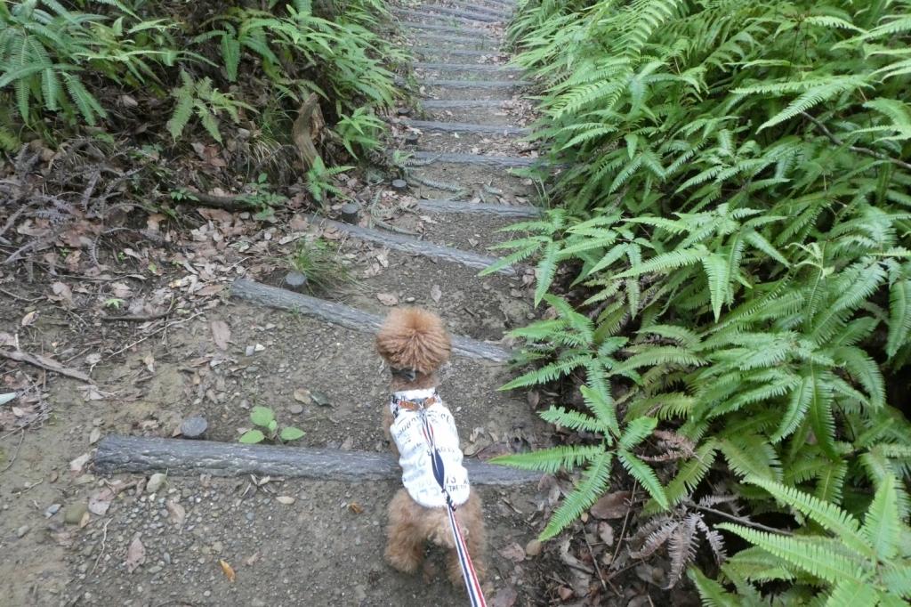 階段は比較的低いので小さいわんちゃんでも登りやすいです