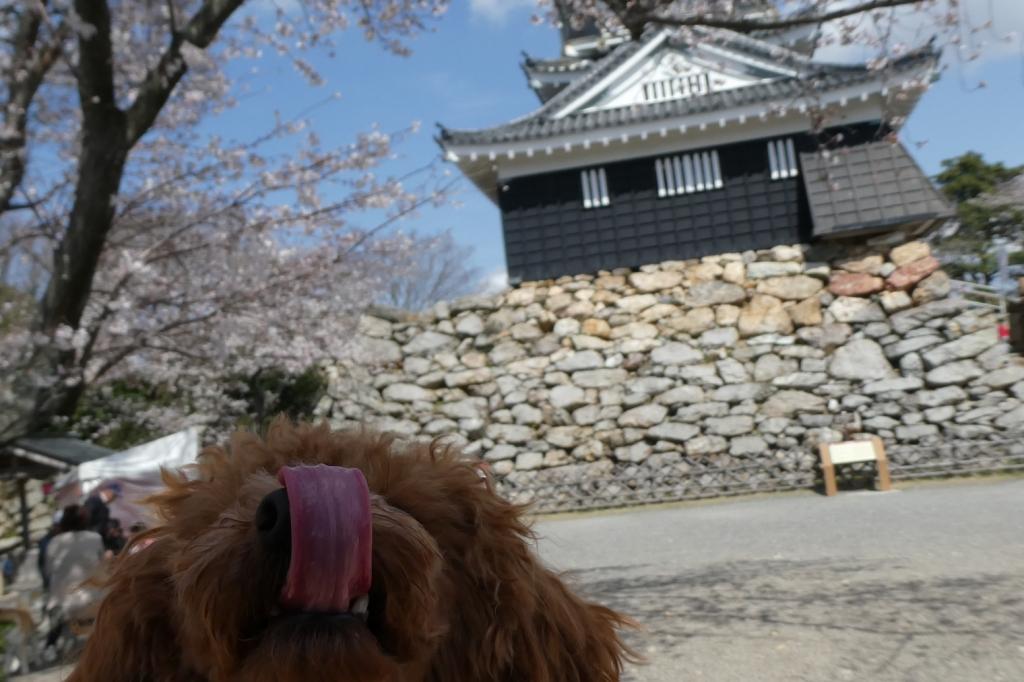 ふうたと浜松城は難しかった