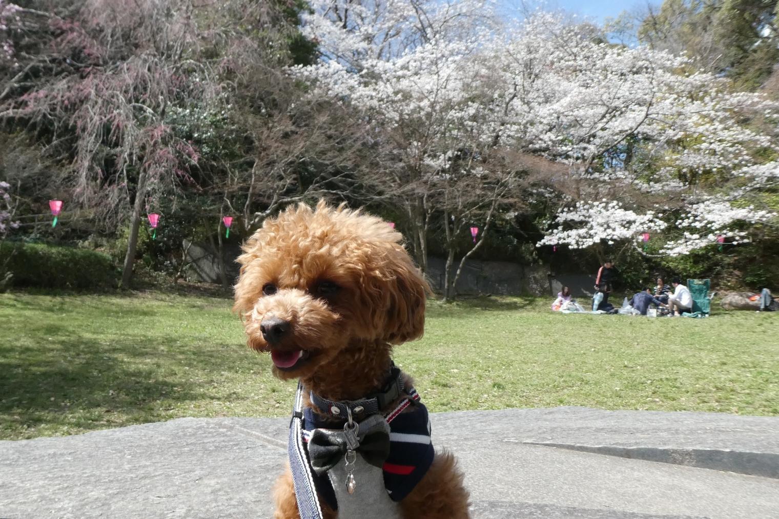 公園ではお花見しているひともいました
