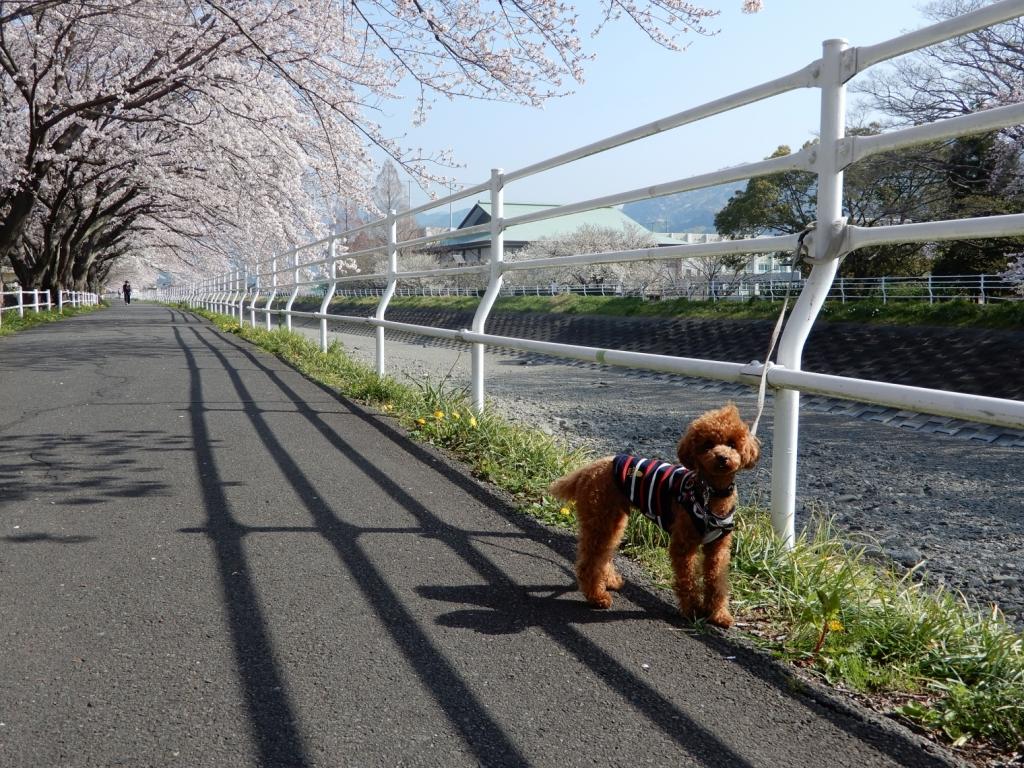 桜とふうた