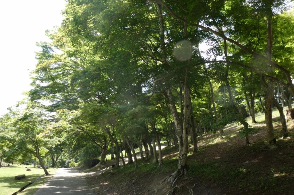 さらに林は続き