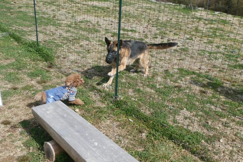 看板犬のシェパードくんと遊んでもらいました