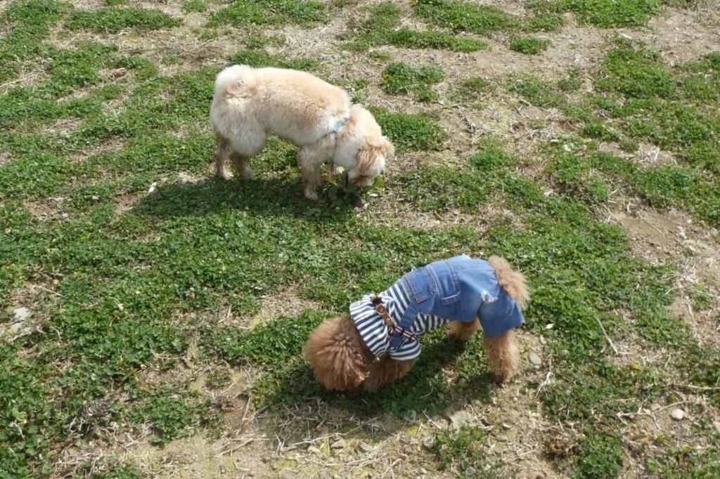 羊のように草を食べたり^^;