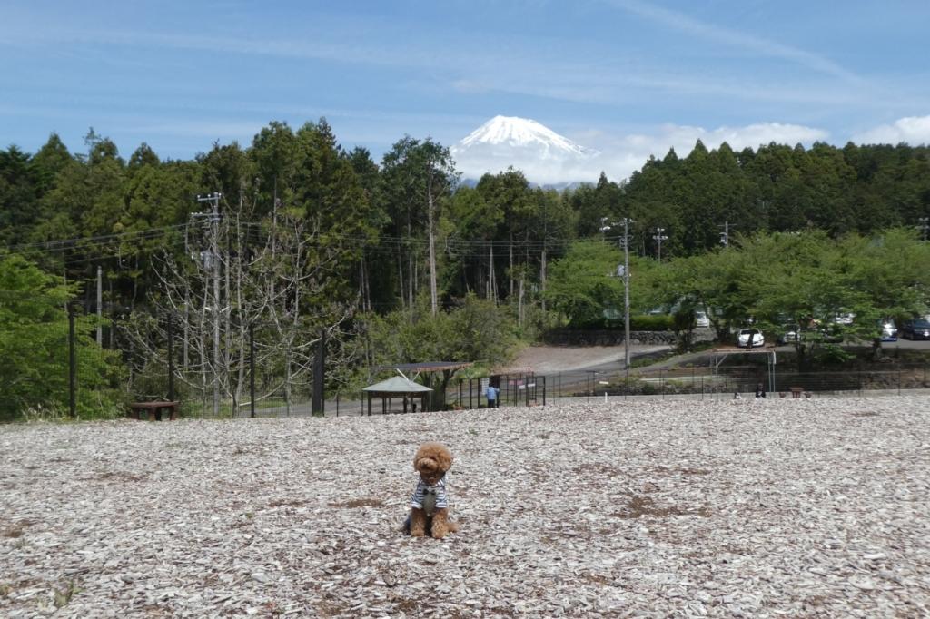 傾斜の上の方に行くと富士山バックに写真撮れますよ