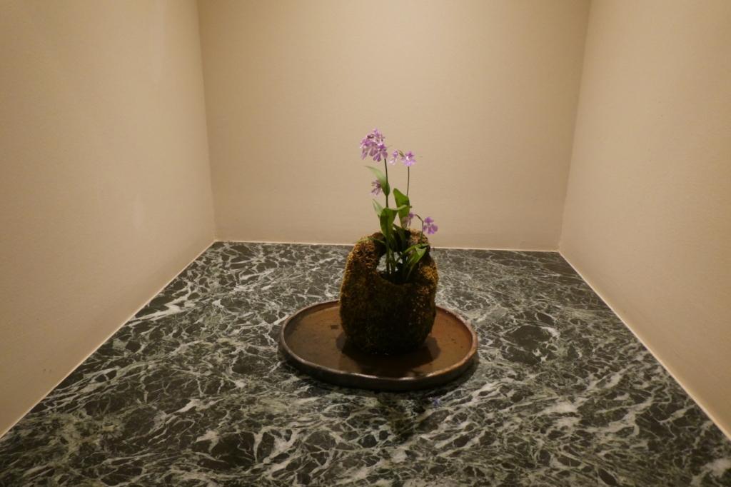 苔玉のお花がところどころに飾ってあってかわいい