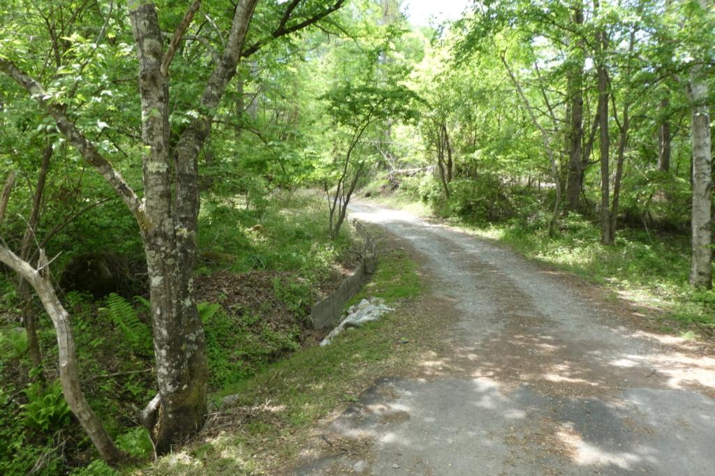 緑いっぱいの小道