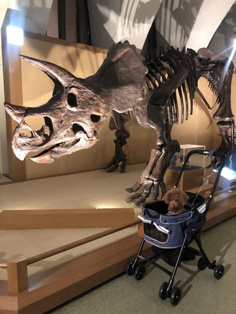 近くでたくさん恐竜の骨見れます