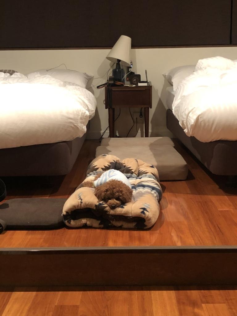 今宵のふうたの寝床