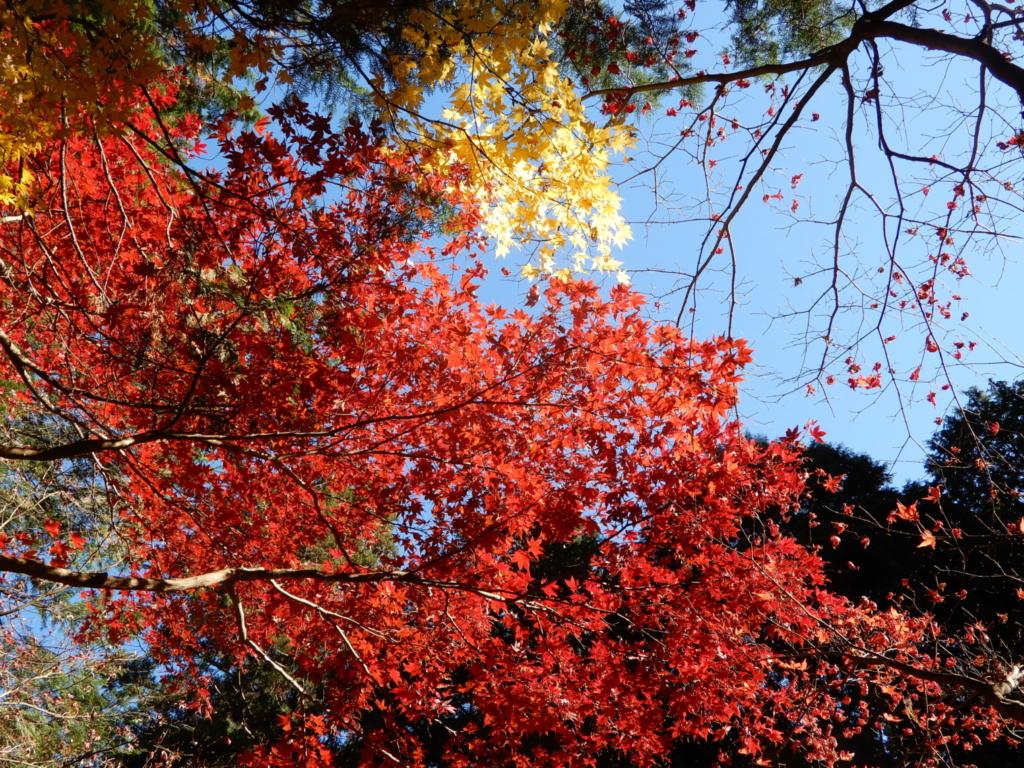境内に行くまでも紅葉でいっぱい