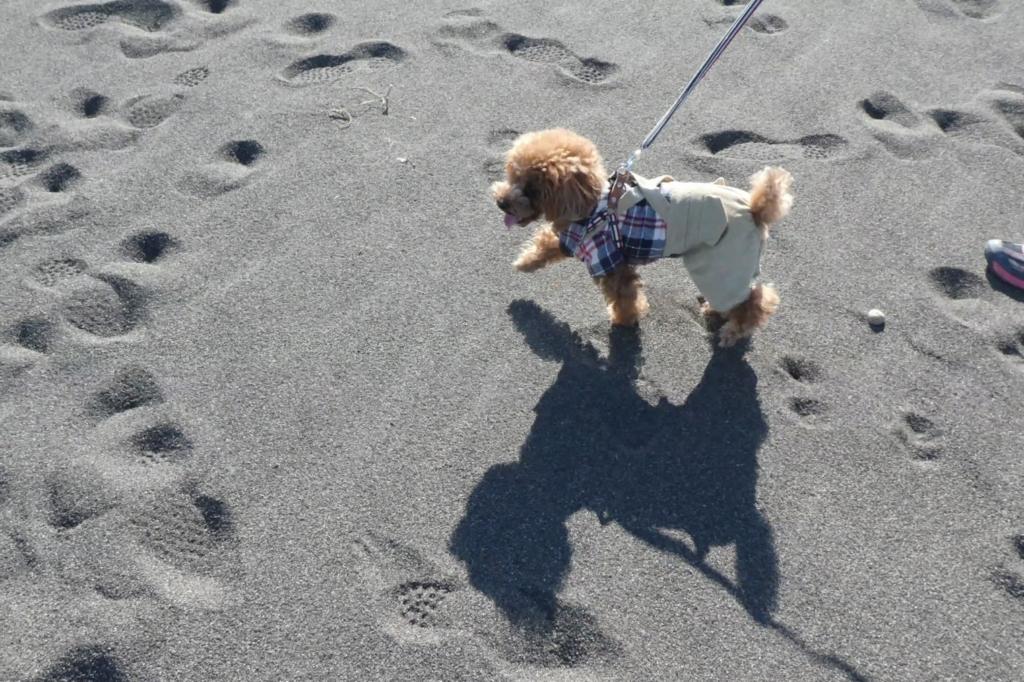 砂浜を楽しく歩くふうた