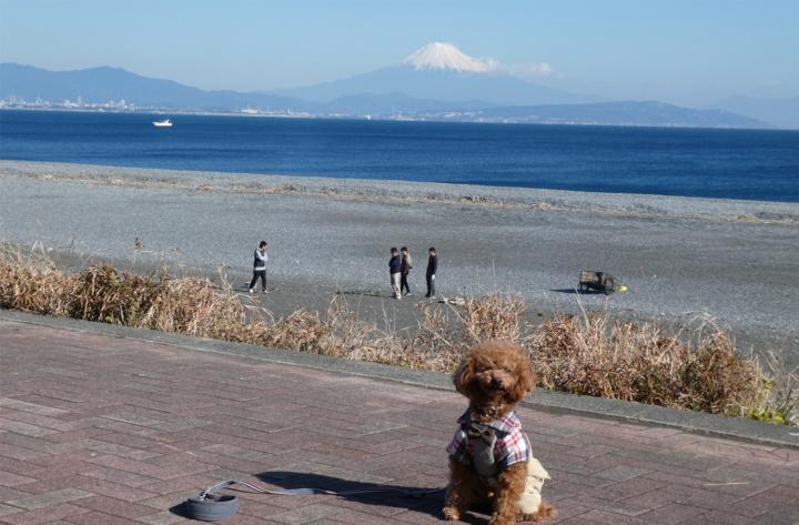 石津浜公園で砂浜散歩(焼津市石津)