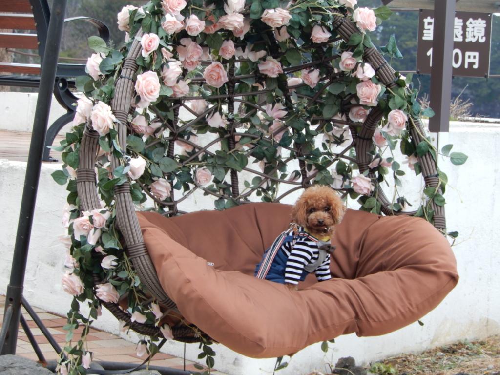 ピンクのバラの椅子