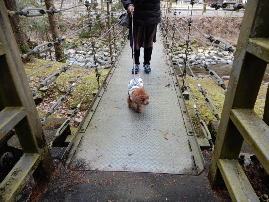 吊橋を渡ると竹林