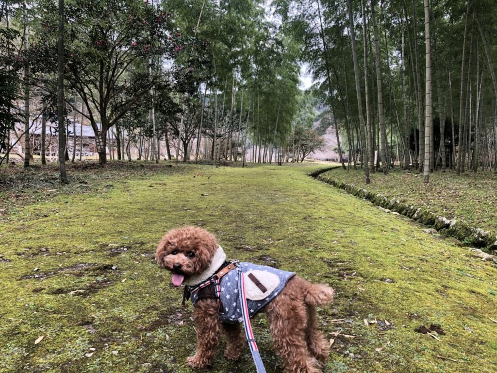 素敵な竹林
