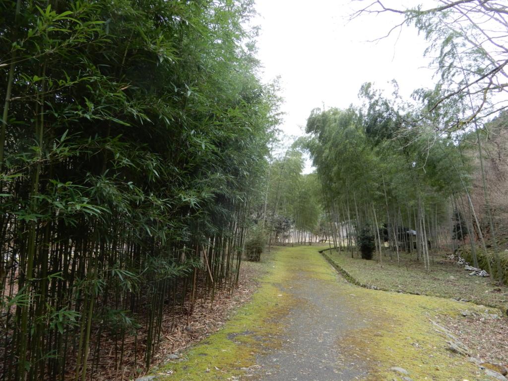 なんか素敵な竹林