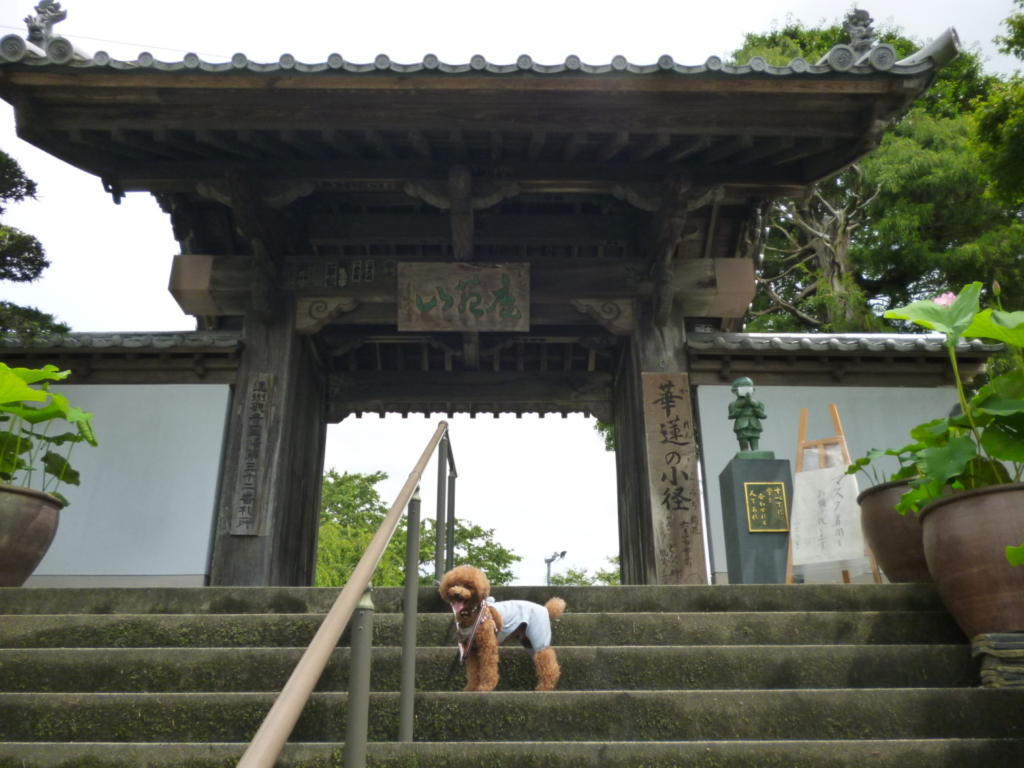 ききょう寺入り口