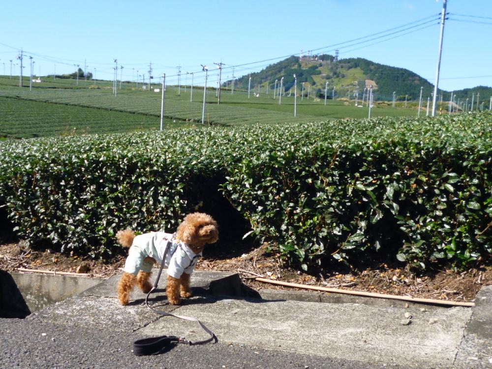 後ろの山にある「茶」のところに行ってきたよ