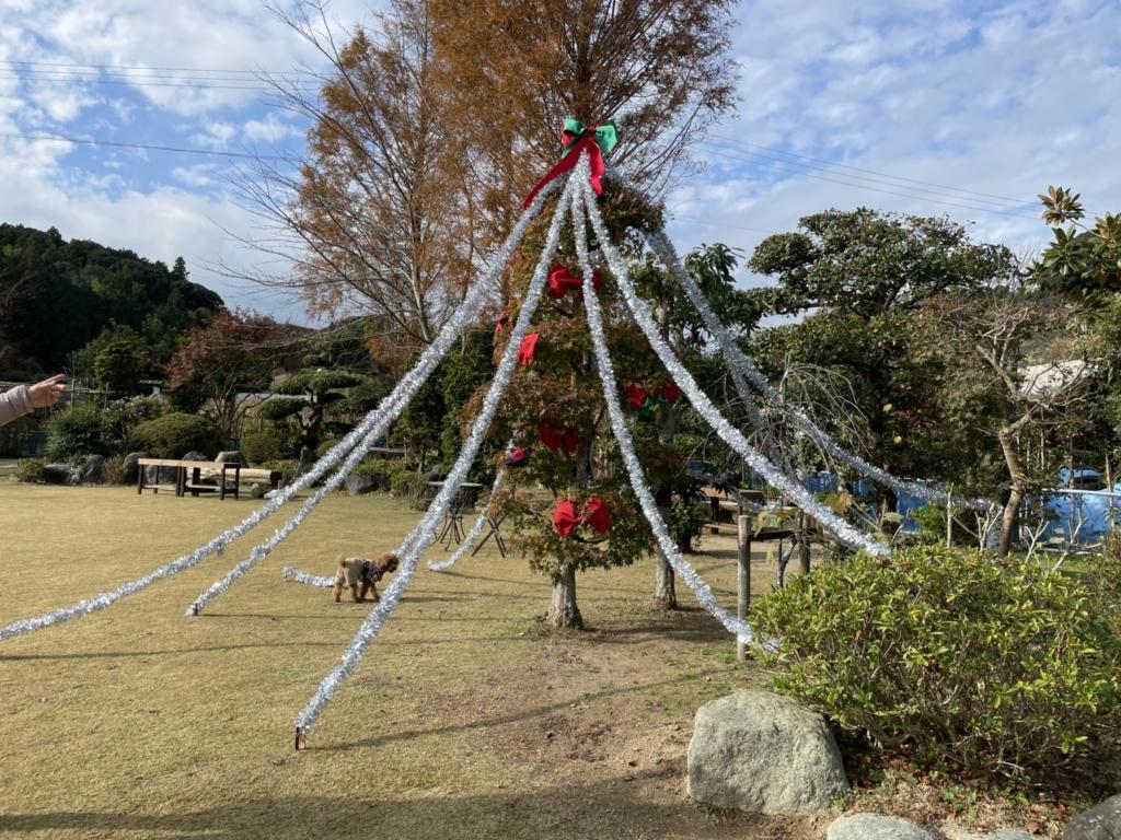 クリスマスツリーありました