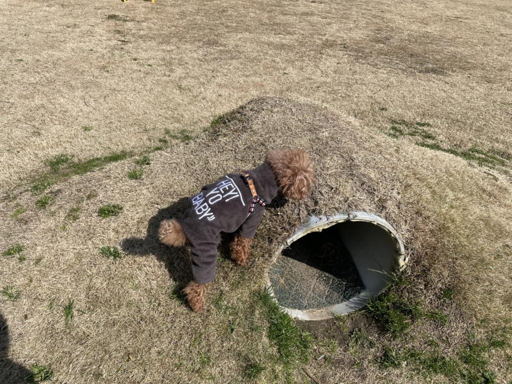 こんなトンネルも