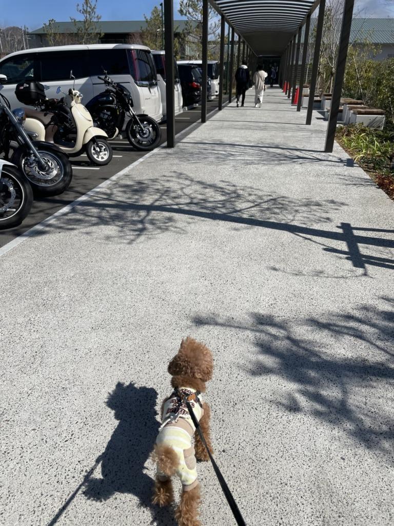 駐車場に車を止め、るんるんなふうた